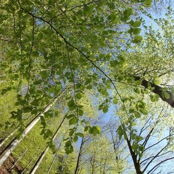 Lichter Wald im Naturpark Schwarzwald Mitte/Nord