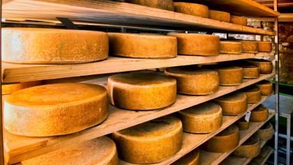 Leckerer Käse in der Lagerung