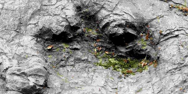 Dinosaurier hinterließen vor Millionen Jahren ihre Fußabdrücke im weichen Schlamm