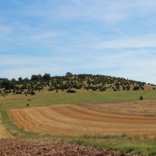 Naturschutzgebiet Baumberg bei Wiesbaum