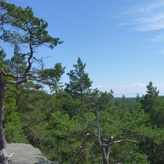 Auf bis zu zehn Meter hohen Felsblöcken wachsen manchmal kleine Kiefern