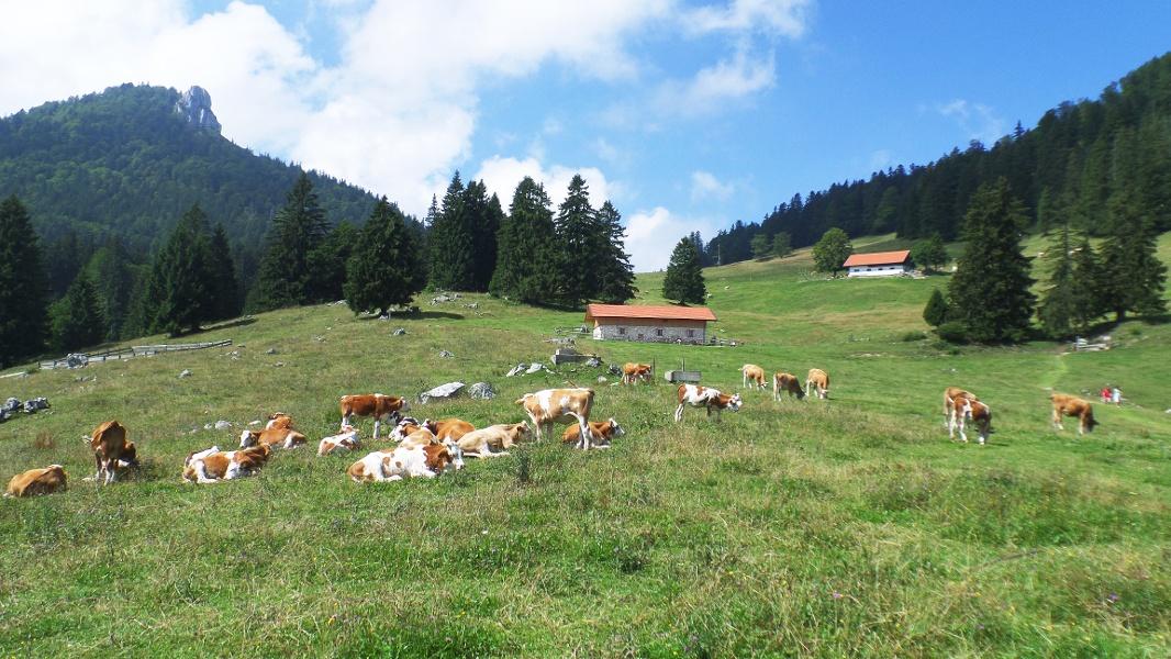 Almlandschaft auf den Grassauer Almen