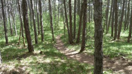 Typischer Trail am Lindkogel