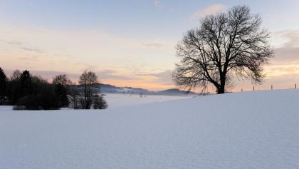 Winterlandschaft mit Baum bei Isny im Allgäu