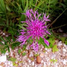 Schöne Flora