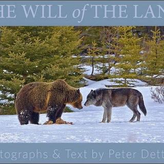 Bilder von Peter Dettling
