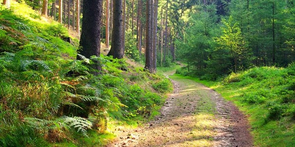 Waldweg © Liane M - fotolia.com