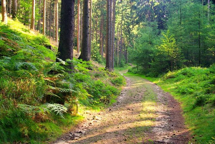Foto (c)Liane M - fotolia.com / Waldweg