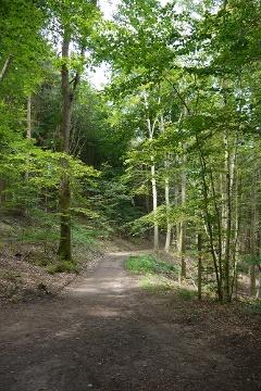 """Erlebnisweg """"Mit dem ökologischen Rucksack durch den Blieskasteler Wald"""""""