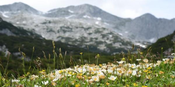 Blumengeschmückter Rückblick zum Bleikogel