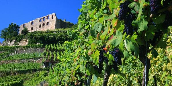 Staufener Schlossberg mit Burgruine