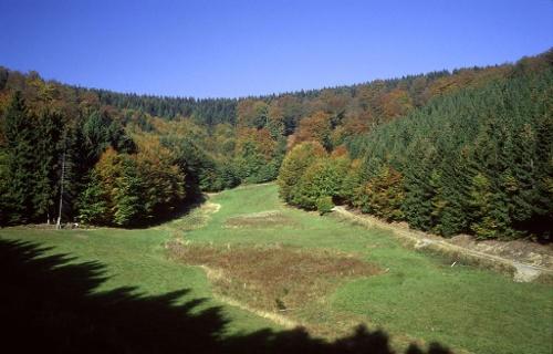 Naturweg Liesetal in Hallenberg-Liesen