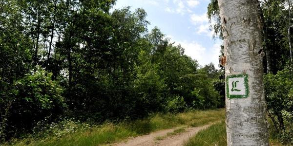Luther Trail between Löbnitz and Bad Düben