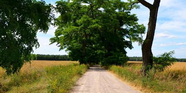 Lutherweg Sachsen Dahlener Heide