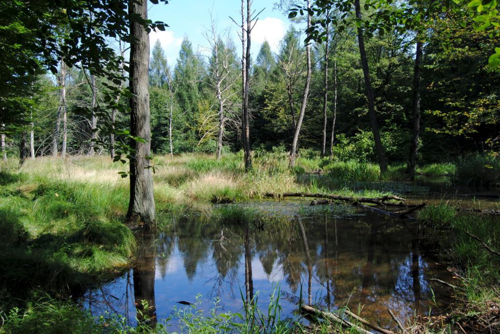 Moorlandschaft Dübener Heide