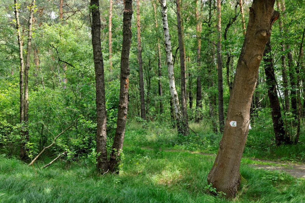 Lutherweg Schnaditzer Wald