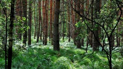 Lutherweg Tiefenseer Wald