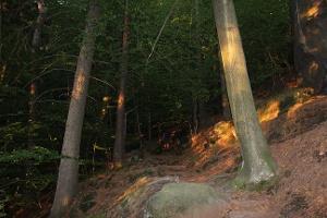 """Foto Der Wanderpfad """"Kahntilke"""" zur Kleinen Bastei"""