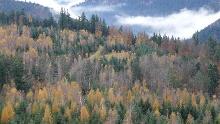 NaTour im Klebwald bei Unterreichenbach