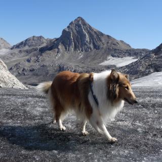 Brandner Gletscher mit Blick auf Schesaplana