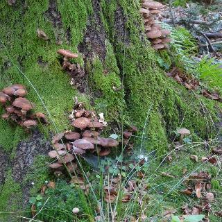 Pilze, Moose und Flechten sind am Wegesrand zu entdecken