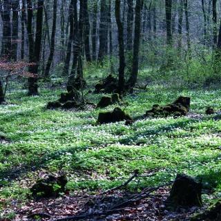 Niederwald am Kleinen Berg