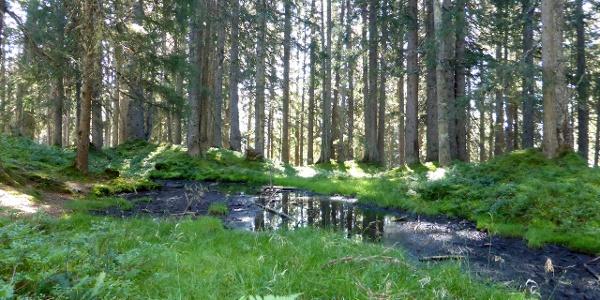 Tümpel und kleinere Seen