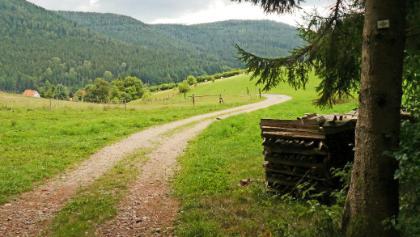 Aus dem Wald Richtung Huzenbach