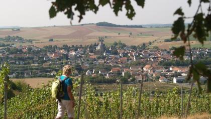 Blick aus den Weinbergen auf Windesheim