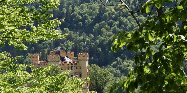 Blick zum Schloss Hohenschwangau