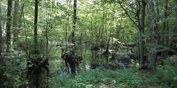 Moorwald