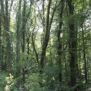 Verwunschene Wälder