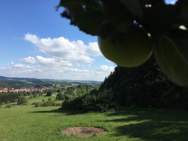 Schwende Apfelbaum mit Sicht auf Rietheim