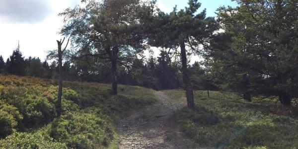 Trail Richtung Sahnehang