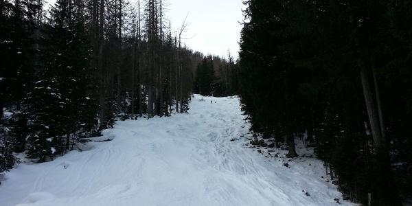 Die FIS Schneise zur Watzmann Gugl