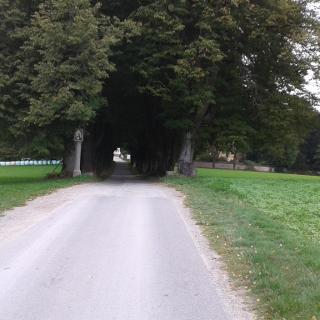 Allee vor dem Schloss Helfenberg
