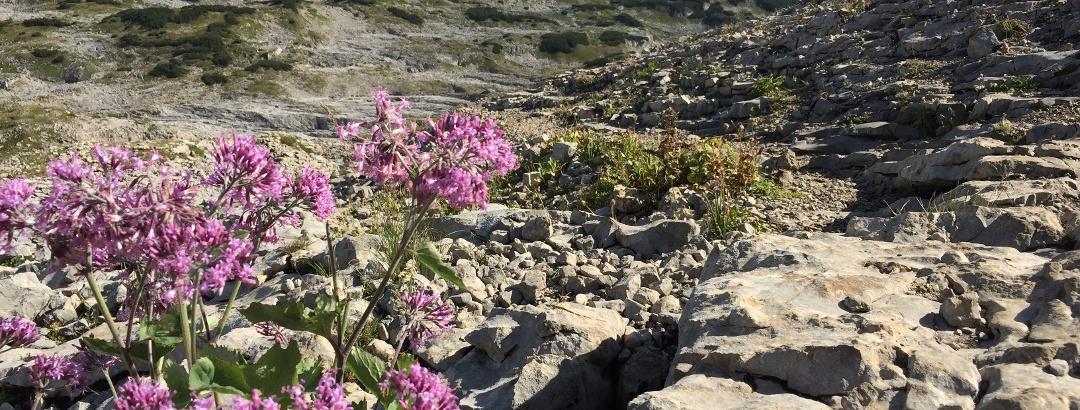 Botanik am Gottesackerplateau
