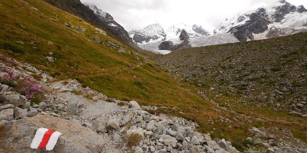 Ausblick auf die Berninagruppe: links die Piz Bernina, mittig die Piz Scercen und rechts die Piz Roseg