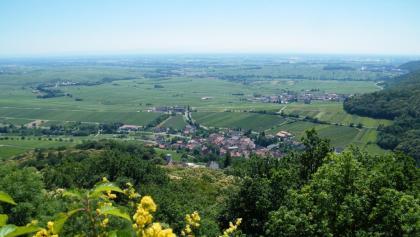 Blick von der Ruine Neukastell auf Leinsweiler