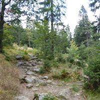 Urwald am Arber