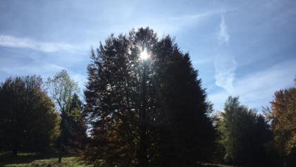 Sonne scheint durch den herbstlichen Baum