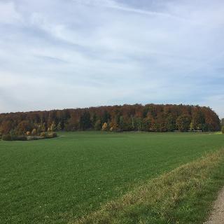 Weg in Richtung Münsingen
