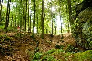 Eifel-Wälder (Foto: Dominik Ketz, Quelle: Eifel Tourismus GmbH)