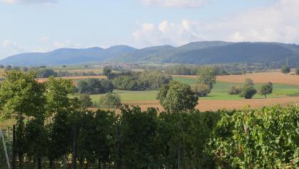 Blick vom Höhenweg auf den Pfälzer Wald