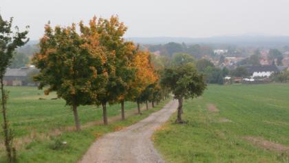Weg vom Tanneberg nach Arnsdorf