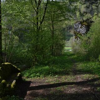 Aus dem Wiesenttal durch den Schluchtwald
