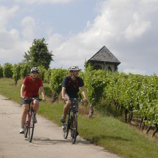 Die Weinpanorama-Tour