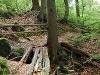 Bodenbachschlucht  - @ Autor: Beate Philipp  - © Quelle: Naturpark Schwäbisch-Fränkischer Wald