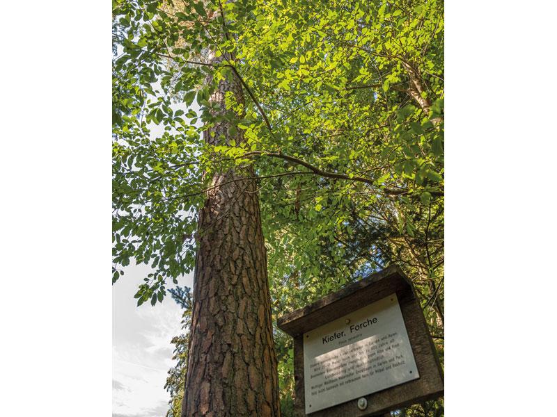 Idyllische Straße Tour N - Teufelsteinroute  - @ Autor: Beate Philipp  - © Quelle: Naturpark Schwäbisch-Fränkischer Wald