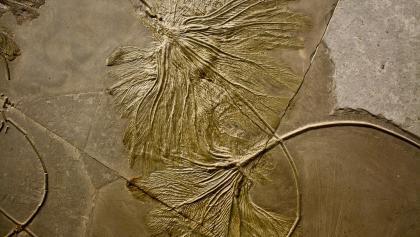 Seelilien im Urwelt-Museum